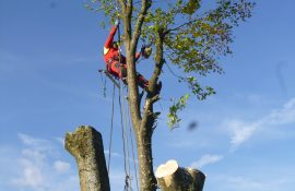 Gefahrfällung durch Seilklettertechnik