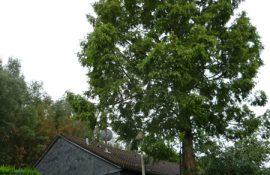 Holzmichel Baumschnitt & Baumpflege