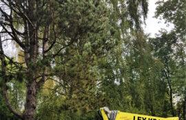 Garten und Landschaftsbau Holzmichel Baumarbeiten mit Hebebühnenkran Kopie