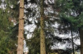 Garten und Landschaftsbau Holzmichel Baumfällung (2) Kopie