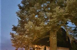 Garten und Landschaftsbau Holzmichel Baumfällung Wiehl Kopie
