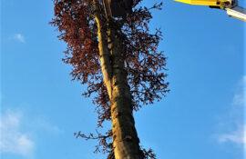 Garten und Landschaftsbau Holzmichel Baumfällung mit Hebebühne Kopie