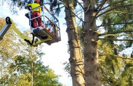 Garten und Landschaftsbau Holzmichel Baumfällung mit Hebebühnentechnik (2) Kopie