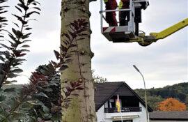 Garten und Landschaftsbau Holzmichel Baumfällung mit Hebebühnentechnik Kopie