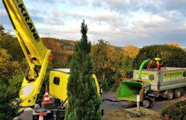 Garten und Landschaftsbau Holzmichel Baumschnitt Kopie