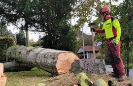 Garten und Landschaftsbau Holzmichel Gefahrfällung Kopie